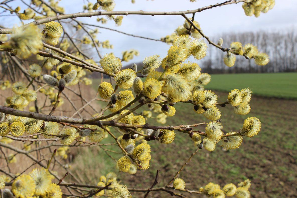Allergie Frühjahr